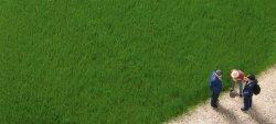 Auhagen Grasfasern - dunkelgrün 4,5mm, 50g Beutel